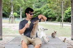 Japan's Rabbit Island Is the Cutest Place on Earth | FATHOM Japan Travel Guides and Travel Blog