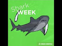 Shark week is one of our favorite times of year. We love how fascinating shark teeth are! In some ways they're similar to ours, and in others they're wildly . All About Sharks, Shark Week, Dental, Teeth, Animals, Animales, Animaux, Animal, Tooth