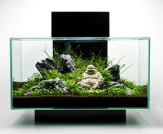 If you anticipate building an aquarium, please make sure that you get your fish supply from a spot that genuinely cares about animal health. An aquarium has to be maintained regularly to be certain that the fish are kept healthy. Aquascaping, Aquarium Landscape, Nature Aquarium, Aquarium Terrarium, Planted Aquarium, Fish Tank Terrarium, Aquarium Design, Betta Fish Tank, Aquarium Fish Tank