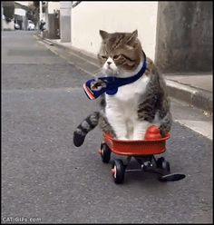 They see me rollin' they hatin'…