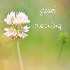 Morning Images have such a power to brighten our day when we stumble upon them! This collection features good morning quotes, all on pics of beautiful flowers.