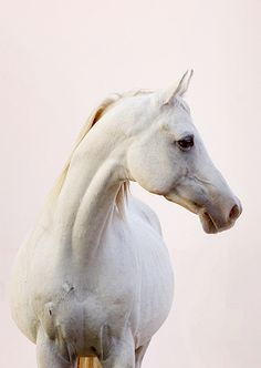 Horse ~ Soft Sunset