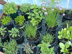 Simple herb garden instructions with uses for each item.  Grow in doors or outside.  Never thought of using thyme as ground cover in flower beds, but it would be great... I put some in a pot last year and it spread everywhere.