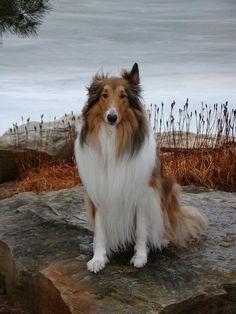 This is the dog I'm going to get after I buy a house (after graduate school).