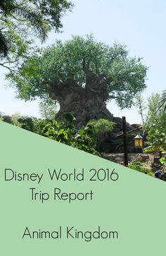 Disney World 2016 Diary - Animal Kingdom - The Life Of Spicers