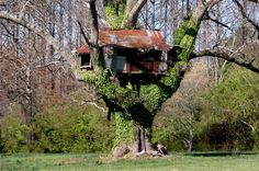 treehouse | Very old treehouse in Georgia