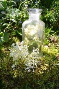 DSC_0518 Herb Garden, Glass Vase, Herbs, Home Decor, Decoration Home, Room Decor, Herbs Garden, Herb, Home Interior Design