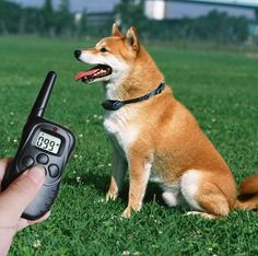 collar eléctrico para perros