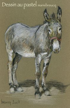 Pastel Drawing Marie Breucq FRENCH dessin au pastel Marie Breucq Brown donkey FRENCH âneMarron