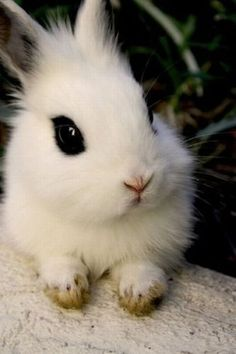 she definitely knows how to apply her mascara ;)... It's a hotot bunny.. Not sure if its baby or dwarf :)