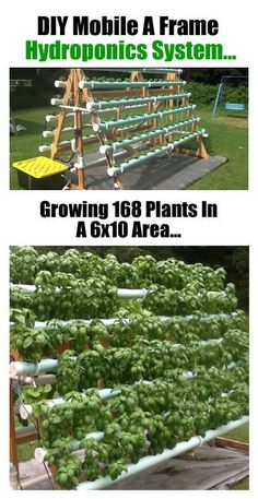 How To Grow 168 Plants In A 6 x 10 Area With A DIY Vertical A-Frame Hydroponic System… | http://www.ecosnippets.stfi.re/gardening/diy-vertical-a-frame-hydroponic-system/