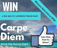 We're so happy to be finally drying out after Hermine, we're GIVING AWAY A FREE BAR OF OUR LAVENDER FIELDS SOAP! Head on over to Eco-Musings Soapery & Such Facebook Page to enter! And don't forget to like the page!