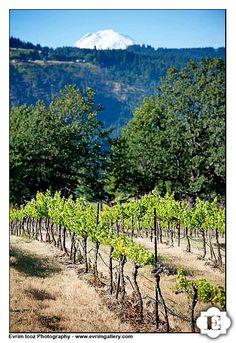 Weddings   Cathedral Ridge Winery