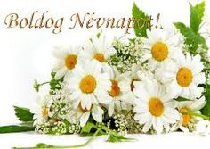Healing Plants and Herbs, Their Benefits - The Benefits Of Nature Exotic Flowers, Colorful Flowers, Chamomile Tea Benefits, Light Blue Roses, Homemade Cosmetics, Flower Pictures, Pictures Images, Flower Wallpaper, Fairies Garden