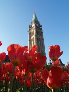 Tulip Festival, Ottawa, Ontario, Canada.  http://blog.favoroute.com/holidays-around-the-world/
