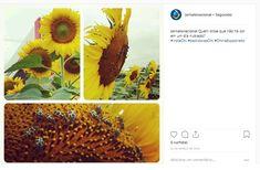 Passo Fundo - Caroline Domingos para o instagram do Jornal o Nacional. Cobertura fotográfica da Expodireto Cotrijal. Fruit, Instagram, Step By Step, Frosting, Journaling, Backgrounds, Fotografia