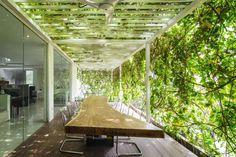 Trepadeiras cobrem a lateral e o topo desta sala de reuniões externa, que conta com teto tipo pergolado.