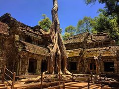 """✈️⛩ . . . #taprohm #cambodia #camboya #trees #tree #travel #travelgram #travelinspiration #asian #asia #travelgram #travelphotography #like4like #likeforlike #taptap #wonderlust #traveling #getaway #l4l #viaje #viajar #instatravel #exploretheworld #travelblogger #travels #temple #traveller #traveler #paradise #nature"" by @rafallopz. #fashionbloggers #bbloggers #fbloggers #blogs #bblogger #beautyblog #beautybloggers #instagramers #roadtrip #여행 #outdoors #ocean #world #hiking #lonelyplanet…"