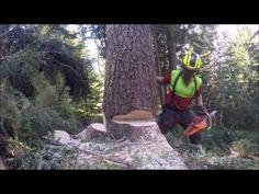 Baum Fallen Sicher Und Richtig Teil 1 Grundlagen Holz Machen Sage