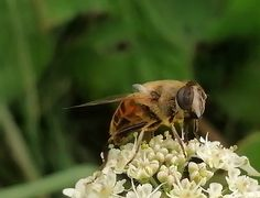 Insects, Bee, Animals, Animais, Animales, Animaux, Animal, Dieren