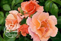 Five Roses Giclee print of an original digitally by InkberryStudio, $100.00
