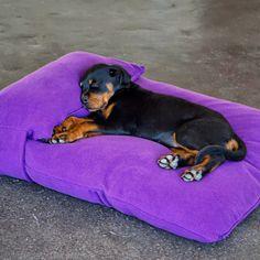 Exquisites Hundekissen  Exquisites Hundekissen mit zusätzlichem Kopfkissen für die Hundeschnute. Dank der tollen Füllung aus Qualitäts Latex Flocken mit hohem Raumgewicht kann Ihr Vierbeiner wunderbar entspannen. Das exquisite Hundekissen ist in 8 verschiedenen Farben erhältlich, inklusive Kopfkissen! Die geräuschfreie, spezielle Latexfüllung und die Verwendung von hochwertigen Materialien verwandeln diesen Schlafplatz zur absoluten Wohlfühloase.