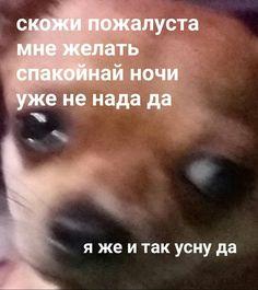 Russian Memes, Russian Quotes, Cat Memes, Dankest Memes, Funny Memes, Hello Memes, Happy Memes, Text Jokes, Fun Live