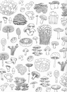 The Forest Adult Coloring Book Pg 46 zeichnung Mushroom Drawing, Mushroom Art, Art Sketches, Art Drawings, Dibujos Zentangle Art, Coloring Books, Adult Coloring, Mushroom Tattoos, Desenho Tattoo