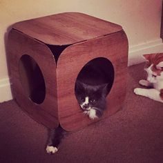 Look at that awesome #PawOfDoom  Simba is so beautiful  and thank you so much for ordering handsome Jaspi a pod too we are packaging it up ready to go   #cat #catsofinstagram #cats_of_instagram #catfurnature #catfurniture #catsinboxes #cattoy #INSTACAT_MEOWS #cutecat #PurrMachine #catsinboxes #catbox #Excellent_Cats #BestMeow #dailykittymail #thecatniptimes #catcube #catpod #ArchNemesis #FlyingArchNemesis #myindoorpaws #ififitsisits #cutecatcrew #catchalet #catnip #themeowdaily #kitty…