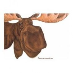 There's something about the moose that gets people excited. Maybe it is the huge size of one or their cute-ugly looks. Whatever the reason, people love them.  Learn more about the way a moose lives, what a moose eats, and where you can see a moose....