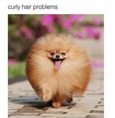 Curly hair problems #meme #lol