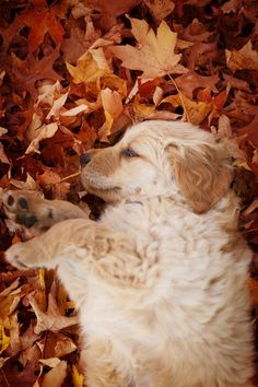 just snoozin in the leaves...