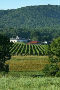 Virginia wine sales reach all-time high Monticello Wine Trail, Virginia Wineries, Picture Places, Virginia Is For Lovers, Old Dominion, Wine Sale, Blue Ridge Mountains, Wine Country, Orange County