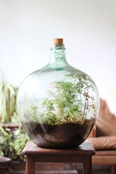 Flaschengarten How to plant up a closed carboy bottle terrarium Terrarium Diy, Terrarium Closed, Bottle Terrarium, Terrarium Centerpiece, How To Make Terrariums, Bottle Garden, Glass Garden, Bottle Plant, Terrarium Wedding