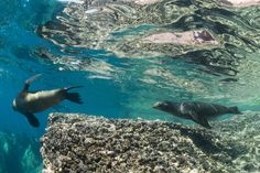 Otaries Les îles Galapagos
