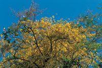 Floración explosiva del pico de loro en la Reserva Natural Mamancana