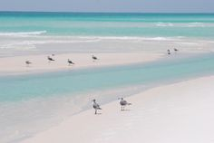 ღღ Navarre Beach, FL - Yes, the water really looks like this... And the sand is white as sugar ❤️