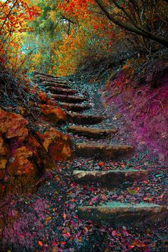 Steps in the Autumn/Fall Woods/Forest. Nature.