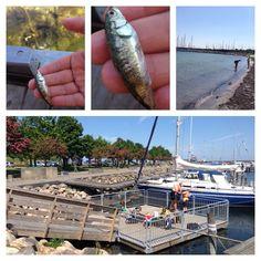 Kastrup Lystbådhavn. En lille smuk oase med massere af skibe, fly i horisonten der skal til at lande, bassin med skaldyr og fisk som ungerne kan kigge på og fiske efter.