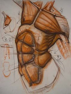 Exceptional Drawing The Human Figure Ideas. Staggering Drawing The Human Figure Ideas. Figure Drawing Tutorial, Male Figure Drawing, Body Reference Drawing, Body Drawing, Anatomy Reference, Life Drawing, Pose Reference, Drawing Tips, Drawing Tutorials