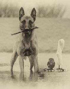 Ingo the Shepherd dog and Poldi the owl by Tanja Brandt.
