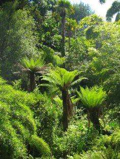 The oldest tree ferns in the Lost Gardens of Heligan, Cornwall Cornwall Garden, Lost Gardens Of Heligan, Townhouse Garden, St Just, Ferns Garden, Tree Fern, Carnivorous Plants, Public Garden, Tropical Garden