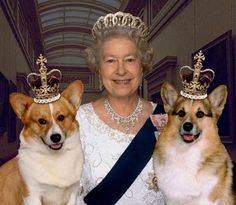 Fun Fact: The Corgi is a part of the royal family in England. Queen Elizabeth II has several Corgis and has held gatherings with other breed enthusiasts. Prinz Philip, Die Queen, Isabel Ii, Queen Of England, England Uk, London England, Pembroke Welsh Corgi, British Monarchy, Golden Retrievers