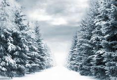 Winter Cloud Forest Snow Backdrop - 9(W)X6(H)FT(2.75x1.8M)