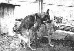 Unsere kleine Welt Dogs, Animals, Wolf Dogs, World, Animales, Animaux, Pet Dogs, Doggies, Animal