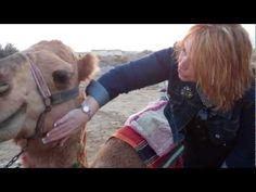 Camel Riding in Israel near the Dead Sea!