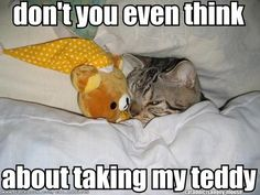 Very cute pictures of cats playing or sleeping with stuffed animals. Very cute pictures of cats playing or sleeping with stuffed animals. Cute Funny Animals, Funny Cute, Cute Cats, Funny Animals With Captions, Funny Kitties, Hilarious, Animal Quotes, Animal Memes, I Love Cats