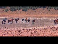"Lacy Dalton Country Singer.."" Let Em Run"" singing about the wild horses here in Nevada..nice video.."