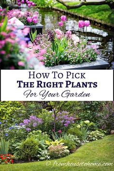 How To Pick The Right Plants For Your Garden | If you are looking for some garden design ideas, this guide will help you to pick the right plants, which makes growing your garden so much easier!