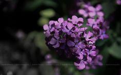 Olhares.com Fotografia | �Jos� M G Pereira | loving flowers